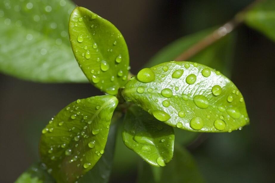 respiracion de las plantas