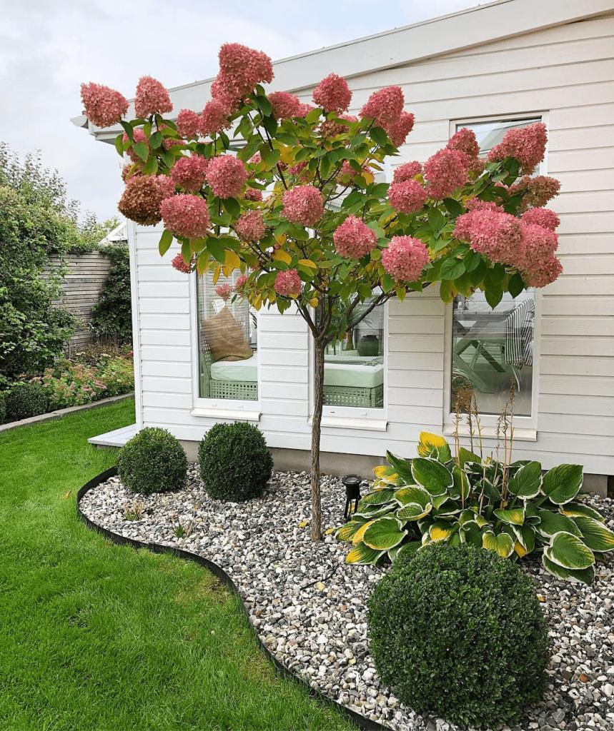 jardin con arboles