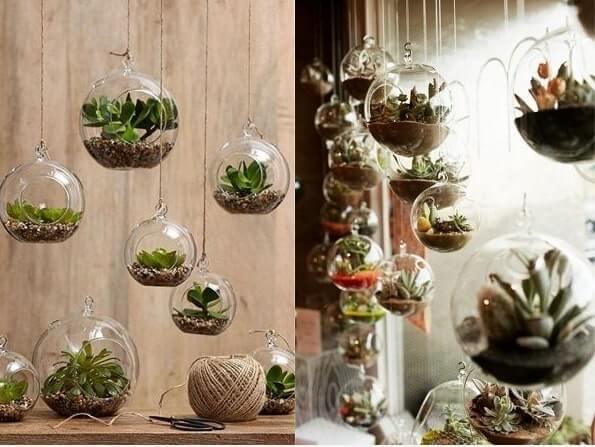 decora con planta suculenta