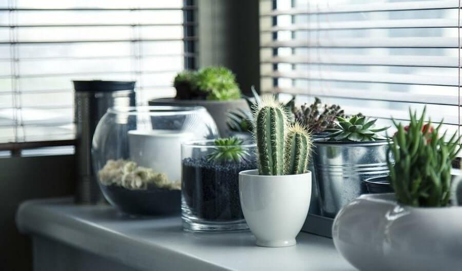 planta suculenta para el hogar
